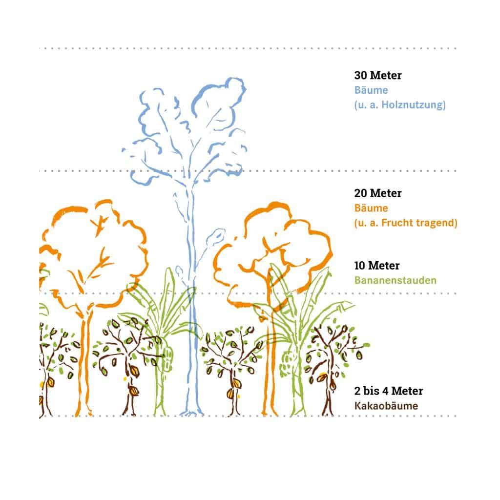 Illustration Agroforst